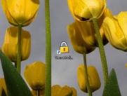 SecretFolder设置中文界面的方法