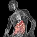 3DBody解剖电脑版 (三维交互解剖软件) 8.0 免费版