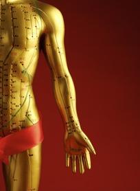 人体穴位3D模型(人体穴位查询软件) 2017 中文免费版