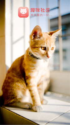 猫咪社区(1)