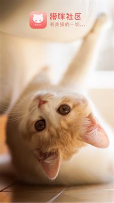 猫咪社区(2)
