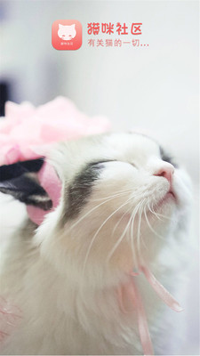 猫咪社区(4)