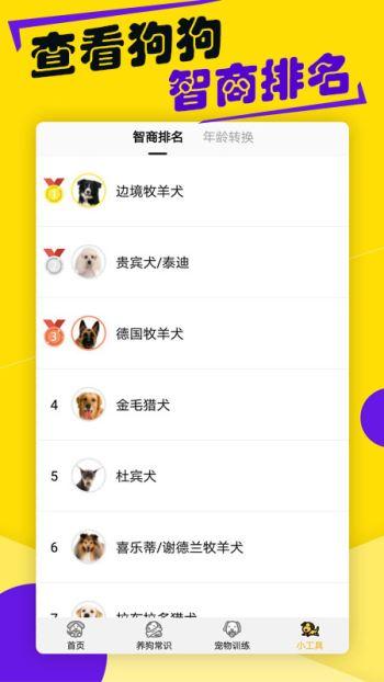 狗语翻译器(3)